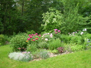 Backyard gardens in summer
